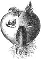 Cherokeegourdmask.png