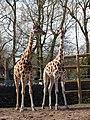 Chester Zoo (9337515916).jpg