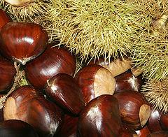 PEČENO KESTENJE -zimska grickalica ili mnogo više 240px-Chestnuts02