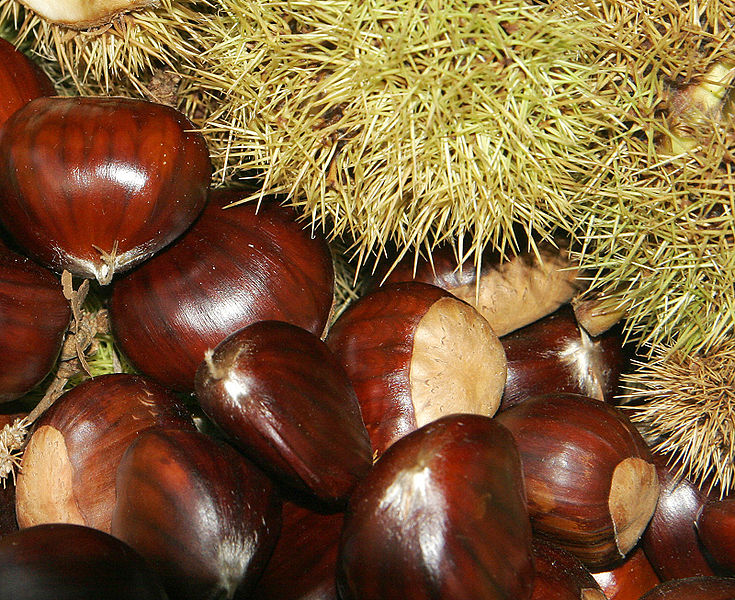 File:Chestnuts02.jpg