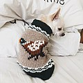 Chihuahuawinter.jpg