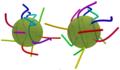 Cilia beating in a multi-ciliated microswimmer.webp
