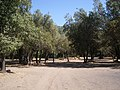 Cipreses (Ranchillo). - panoramio (1).jpg