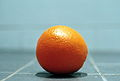 Citrus sinensis close-up.jpg