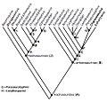 Cladogram met fylogenetische verwantschappen van Charonosaurus.jpg
