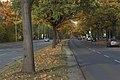 Clayallee, Berlin (8085441556).jpg