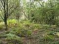 Clyro Common in Autumn - geograph.org.uk - 575023.jpg