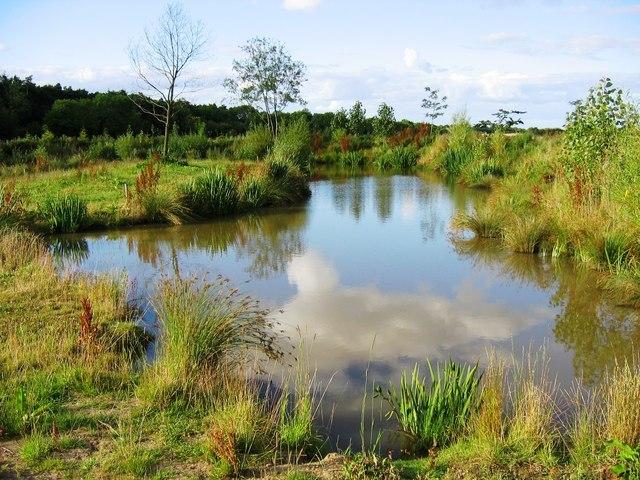 Coarse Fishing Pond at Green Lane Farm - geograph.org.uk - 513827