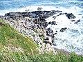 Coast Below Rams Tor - geograph.org.uk - 1481452.jpg