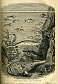 Coastal fish (13530029544).jpg