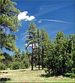 Coconino National Forest, Oak Creek Canyon, AZ 7-30-13b (9511794542).jpg