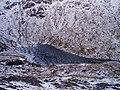 Coirein Lochain - geograph.org.uk - 107473.jpg