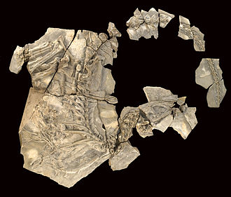 Geology of the Iberian Peninsula - Concavenator corcovatus dinosaur fossil from Las Hoyas, Spain