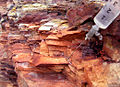 Consolidation of fossil wood.jpg