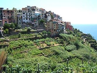 Corniglia - Panorama of Corniglia