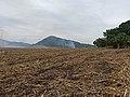Cosecha de caña de azúcar en El Naranjo (SLP).jpg