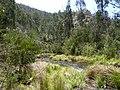 Cotter River - panoramio.jpg