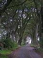 Country Road Near Pilmuir - geograph.org.uk - 245426.jpg