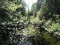 Creek - panoramio (7).jpg