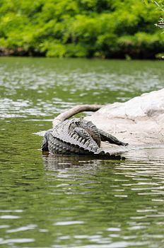 Crocodile Nap.jpg