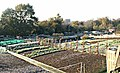 Croxley allotments - geograph.org.uk - 327187.jpg