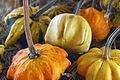 Cucurbita pepo ornamental gourds - pumpkin party.jpg