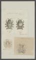 Cyamus ovalis - - Print - Iconographia Zoologica - Special Collections University of Amsterdam - UBAINV0274 098 05 0012.tif