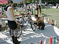 Cyclecide carousel 03.jpg
