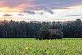Dülmen, Börnste, Schuppen in einem Feld -- 2021 -- 4358-62.jpg