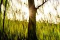 Dülmen, Kirchspiel, Börnste, Abstrakte Bäume -- 2021 -- 8241.jpg