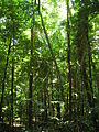 Daintree Rainforest 4.jpg