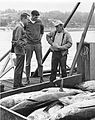 Dan Panshin and Bob Jacobson talk to an albacore tuna fisherman, 1965 (5857916261).jpg