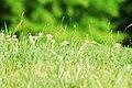 Dans l'herbe (4757124342).jpg