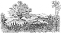 Davie's tree in 1850.PNG