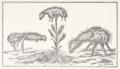 De La Croix 1791 borametz.png