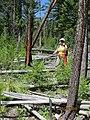 Deadfall trees on the Three Blaze Trail.jpg