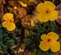 Death Valley National Park - high desert flora on the road down from Dante's viewpoint - (13843534415).jpg