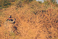 Defense.gov photo essay 081014-A-0000R-021.jpg
