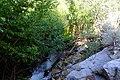 Dense alders along Taboose Creek (42691544514).jpg
