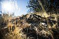 Desert Warrior survival lane 160120-A-TW035-004.jpg