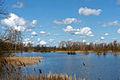 Deutschland Mecklenburg-Vorpommern NSG Fischteiche in der Lewitz Neuhofer Teich Foto Ralf Ottmann..jpg
