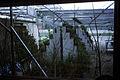 Dicksons Florist greenhouse frames 012.jpg