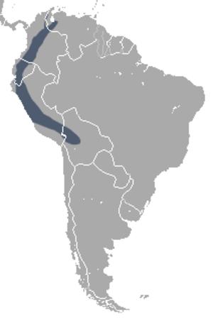 Andean white-eared opossum - Image: Didelphis pernigra area