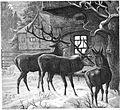 Die Gartenlaube (1869) b 823.jpg