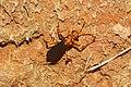 Digger Wasp 9026.jpg
