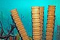 Diorama of a Carboniferous seafloor - sponges 1 (30664994597).jpg