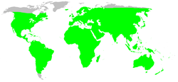Distribution.corinnidae.1.png