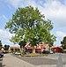 Ditzum - Platz mit Baum.jpg
