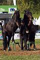 Dressage avec 2 chevaux mondial du cheval percheron 2011Cl J Weber03 (23456699133).jpg