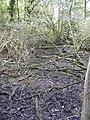 Dried up pond - geograph.org.uk - 1522970.jpg
